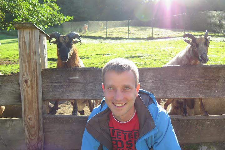 Auch Ziegen und Schaffe sind immer am Puls der Zeit