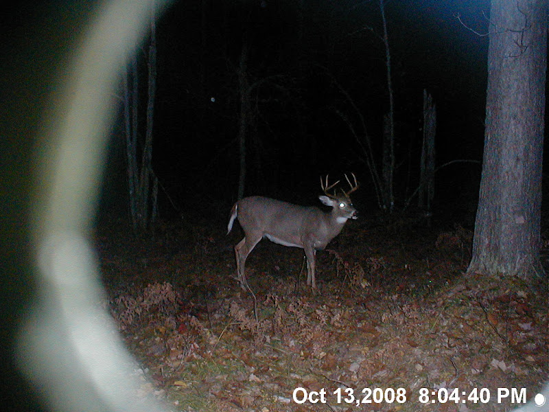 Michigan Whitetail Deer Hunting