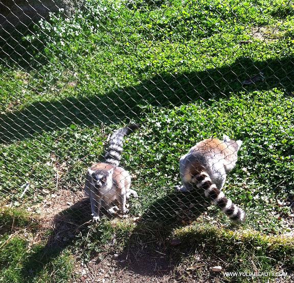 лемуры в мадридском зоопарке