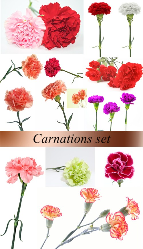 Stock Photo: Carnations set