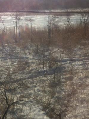 冬枯れの湿原