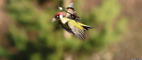 Meme da dupla voadora viralizado nas redes sociais