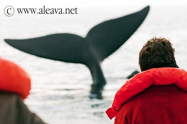 Avistaje de ballenas Puerto Madryn y Puerto Pirámides
