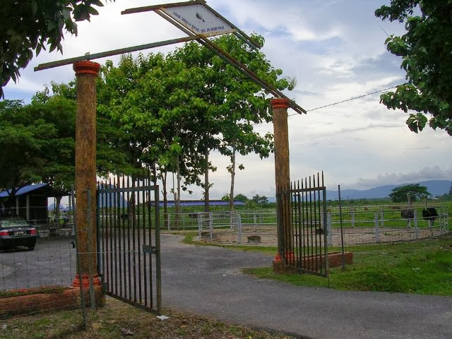 Ladang-Burung-Unta-Ostrich-Farm