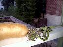 sweet potato question - Page 4 20110902195759