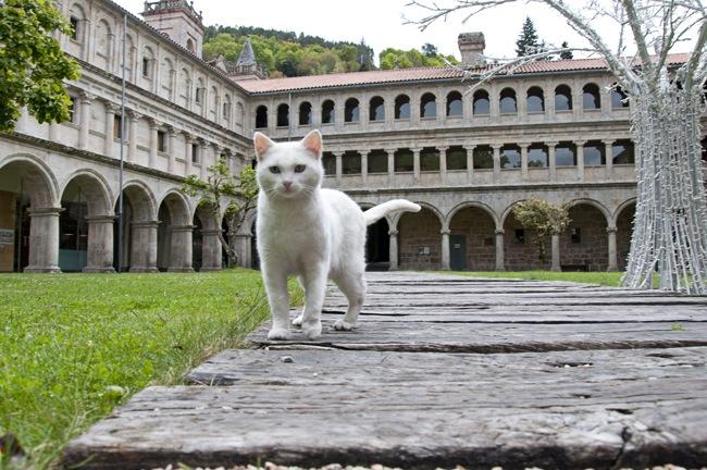 Un gato blanco cerca de la cámara, al fondo un claustro