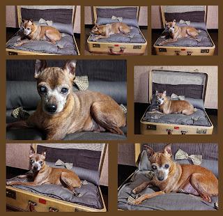 Overstuffed Dog Bed
