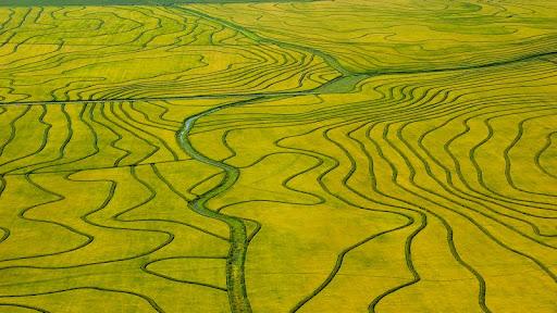 Aerial View of Rice Fields, Uruguay.jpg