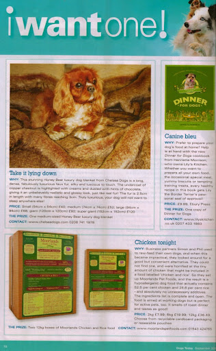 Chelsea Dogs Dogs Today Magazine I Want One Feature September 2012 Issue