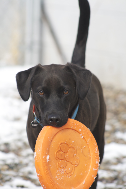 Juno+2 Frisbee?