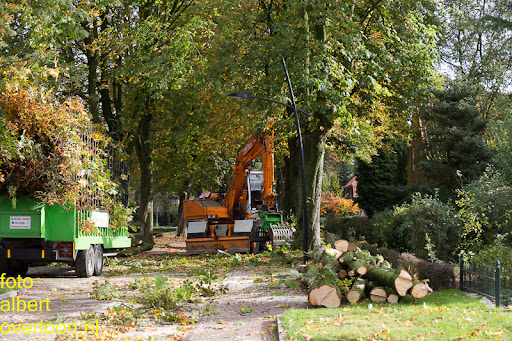 Bomen gekapt Museumlaan in overloon 20-10-2014 (1).jpg