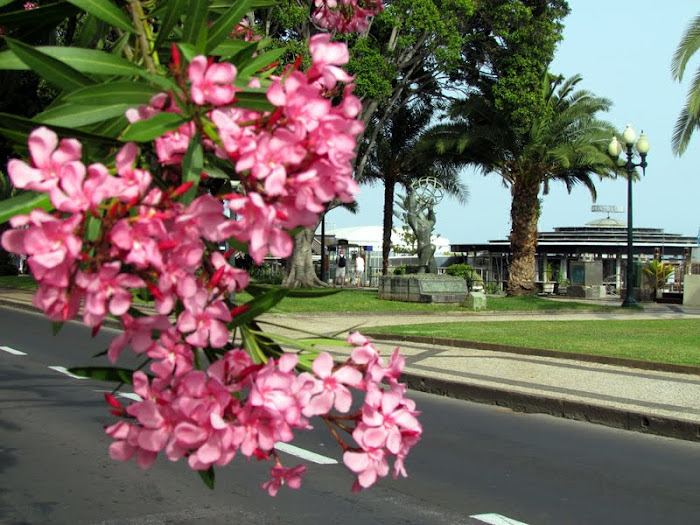 flowers in av. do Mar e das Comunidades Madeirenses