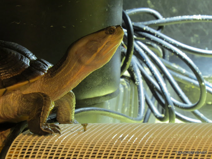 mes tortues (BK) - Page 10 IMG_2158