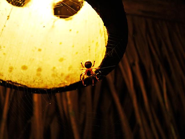 Spider outside my cabin door
