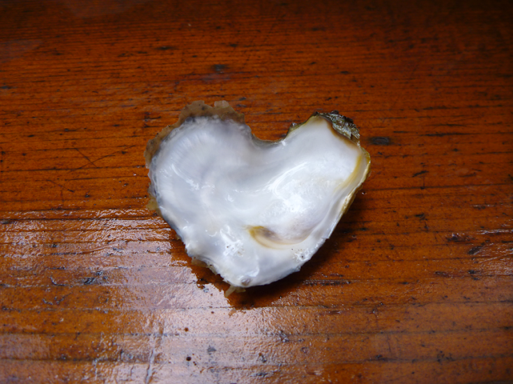 Heart-shaped oyster shell at Miracle Beach, BC (August 2012)