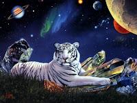 lindo tigre branco