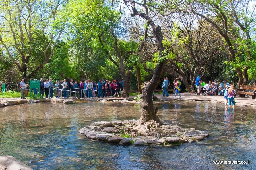 Парадайз в заповеднике Тель Дан. Экскурсия в Израиле.