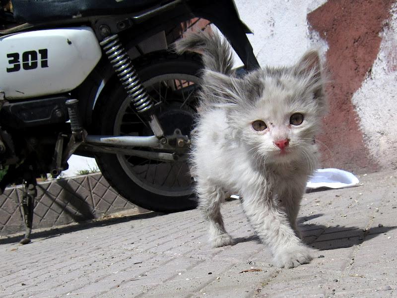 Icky Kitty, Goreme