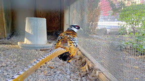 Some of the exotic birds saved and on display on the properties of Cline Cellars
