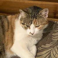 Stepan Shamaiev