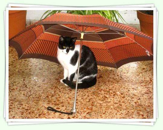 Gat amb paraigües