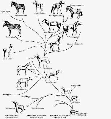 o cavalo origem e evolução equipe lago sul cmv