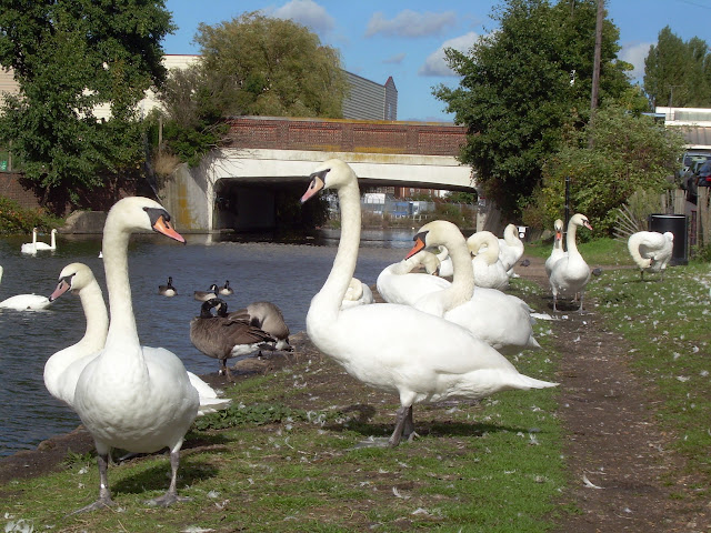 Southall swans