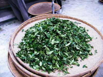 凍頂烏龍茶 併堆發酵