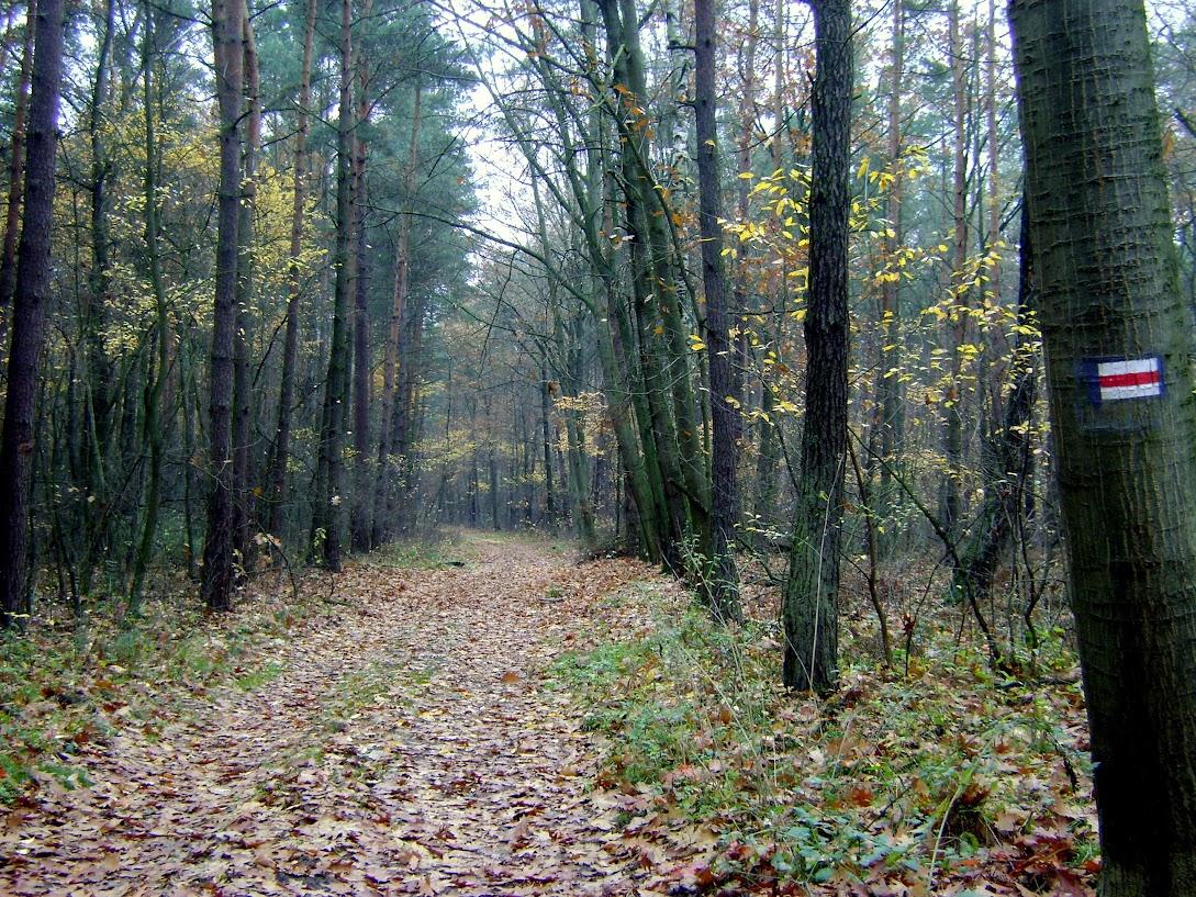 las, Mikołajewice