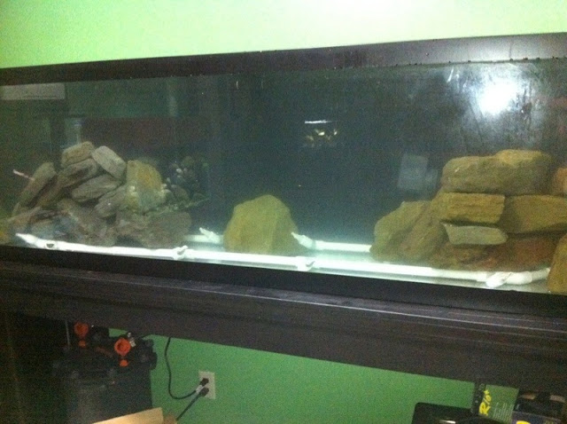 New 75 gallon Tang tank - Page 2 IMAGE_1000000044