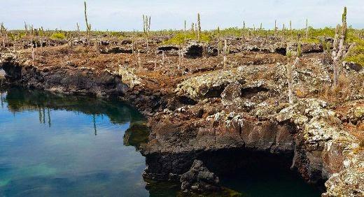 Tuneis Galápagos