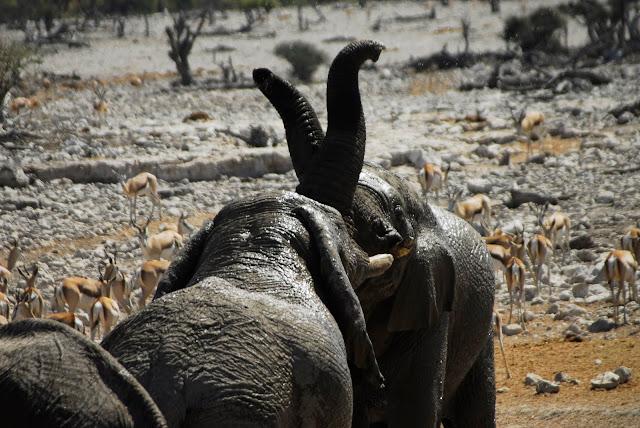 أفضل ما في أفريقيا  Best of Africa Namibia_180807124323