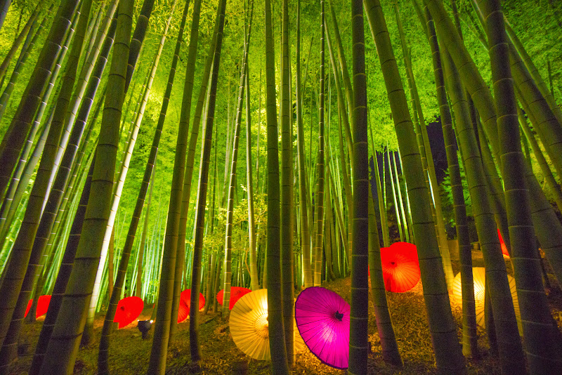 京都 高台寺 竹林 ライトアップ 写真3