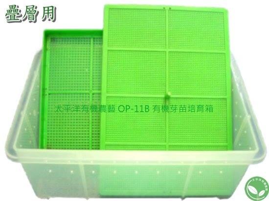 透明有機芽菜培育箱