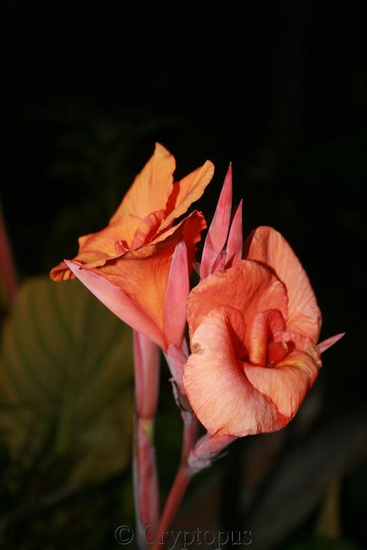 Futur jardin d'orchidées!!! IMG_3621