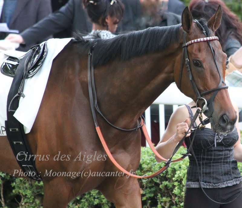 Photos Longchamp 25-05-2014 IMG_1277