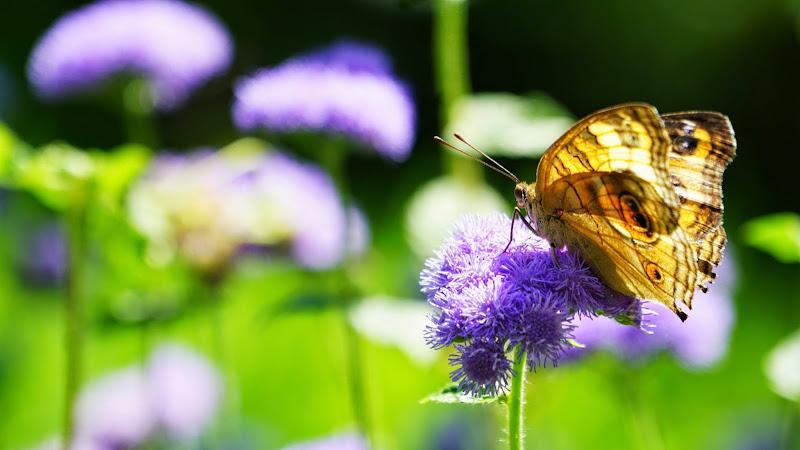 多摩動物公園 蝶 写真