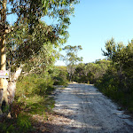Walking along the wide sandy trail north of Patonga Dr (378431)
