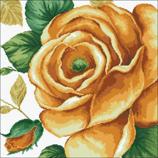 Yellow Rose chart