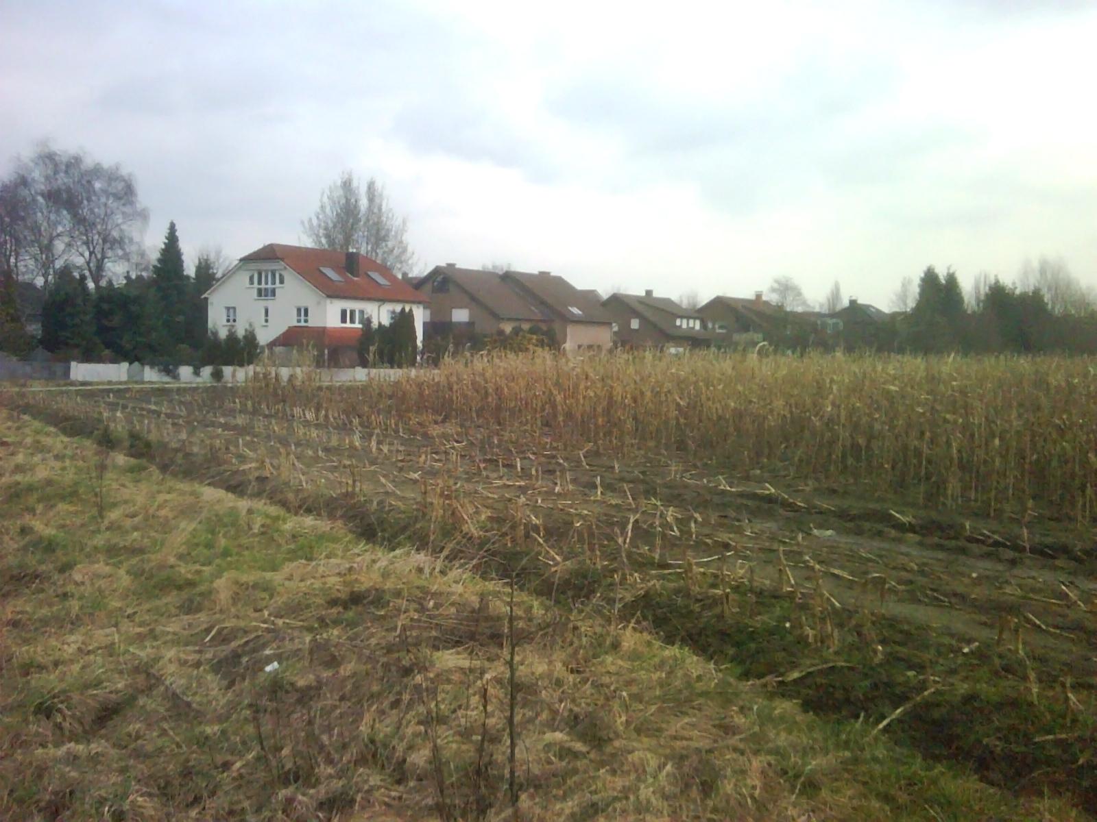 Unser Haus in Waltrop: In diesem Sumpf bauen wir unser Nest