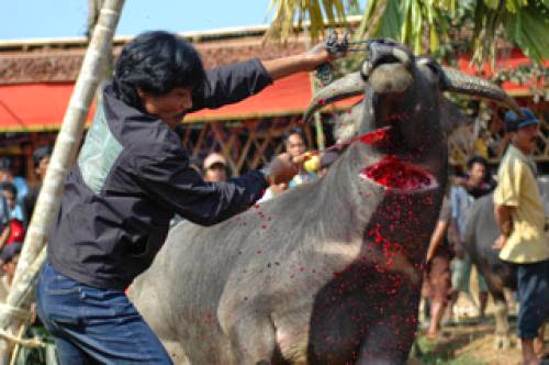 Rambu Soloq Rites Of The Dead Of Tana Toraja