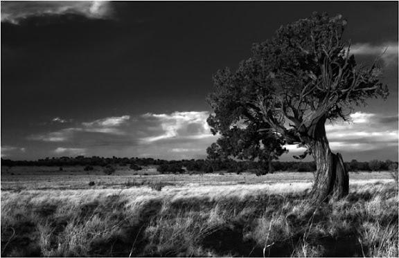 """Juniper Tree"" by Photographer Gary Morrison."