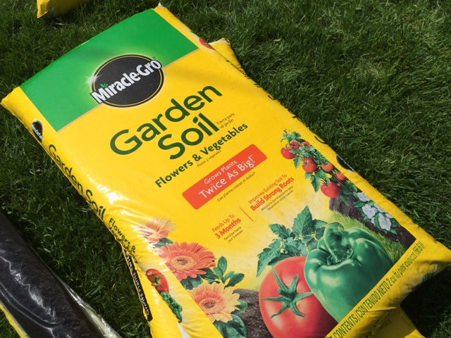 We purchased 8 yards of Miracle-Gro garden soil, which gave us good coverage about 2-3 inches from the top of the cedar frame.