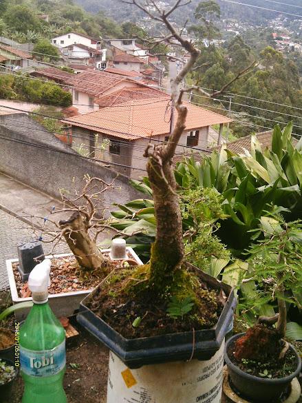 Anjico Vermelho pra Naturalistic... IMAG0228