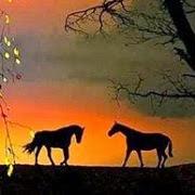К чему снится конь?