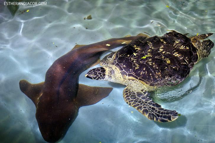 Feeding Sea Turtles at the Shark Reef at Mandalay Bay.