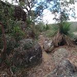 following the rocky bushtrack (76873)