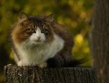 animaux,photo,кошки,