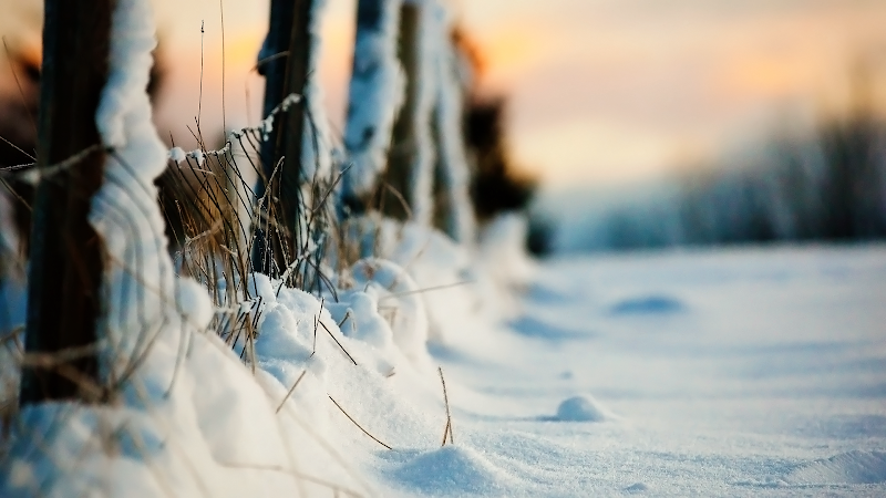 country field winter snow wallpaper