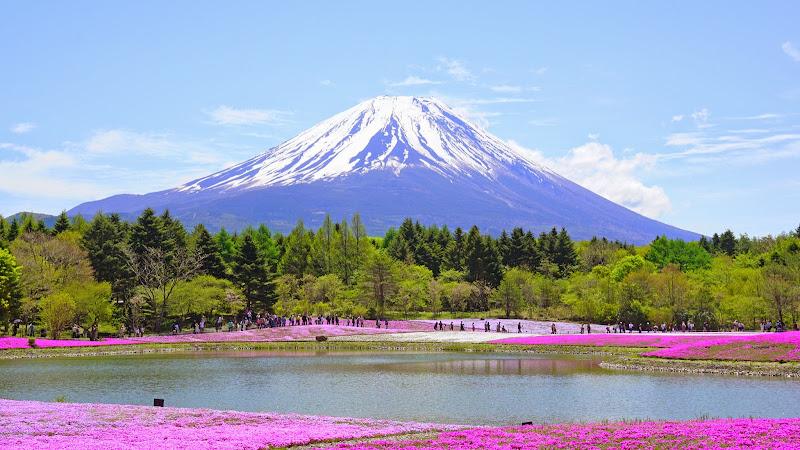 富士芝桜まつり 写真4